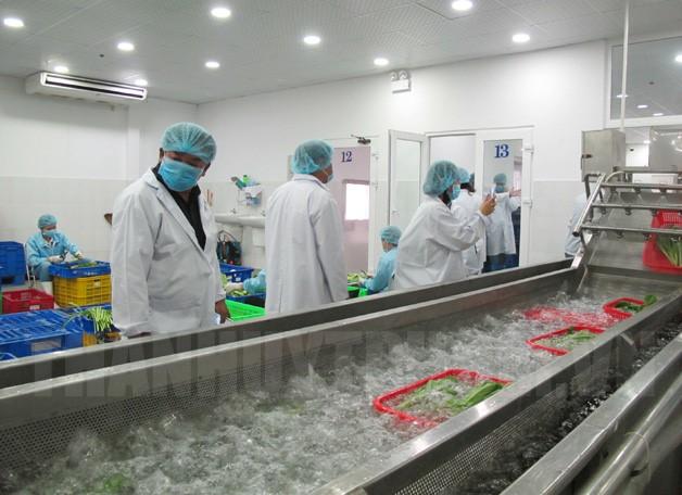 Dây chuyền sơ chế rau sạch tại Công ty Cổ phần Nông nghiệp Kỹ thuật Việt, huyện Củ Chi.
